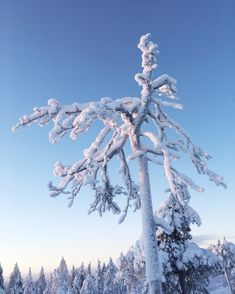 Frosty greetings from Rovaniemi, Lapland. North Country, Finland, Mount Everest, Mountains, Winter, Nature, Travel, Outdoor, Voyage