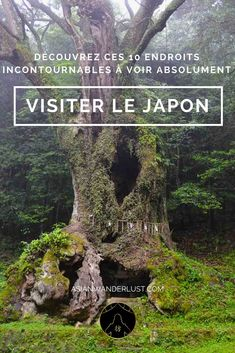 Visiter le Japon - 10 Endroits Incontournables à Ne Pas Rater ! - Visiter le Japon – Découvrez ces 10 endroits incontournables à visiter absolument - Sweden Travel, Asia Travel, Japan Travel, Japan Destinations, Go To Japan, Visit Japan, Costa Rica, Japon Tokyo, Travel Itinerary Template