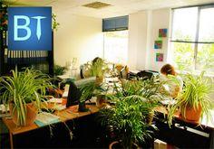 plantes bureau open space - Recherche Google