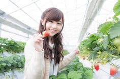 Japanese man's job is too busy for strawberry-picking date, super-sweet girlfriend saves the day Boyfriend Goals Relationships, Boyfriend Goals Teenagers, Strawberry Picking, Strawberry Patch, Amazing Girlfriend, Vacation Days, Nikko, Natural Scenery, Save The Day