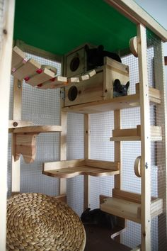 Look from inside - Cloud Play Cage Cage Chinchilla, Chinchilla Care, Ferret Cage, Rat Cage, Chinchillas, Funny Ferrets, Hamsters, Large Hamster Cages, Degu Cage