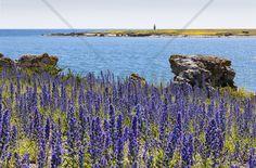 Gotland Summer Landscape - Fotobehang & Behang - Photowall