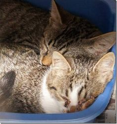 *KILLED>Crossposting to save lives: One feral and one blind cat to be killed Friday at Cabarrus County shelter
