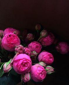 Hot Pink Peonies Order yours: http://www.rebelrebel.co.uk/orderflowers/ #Peonies #Florist