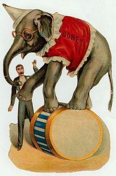 Circus ELEPHANTS on Pinterest   Circus Poster, Vintage Circus ...