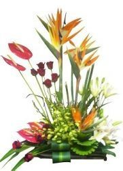 A very Exclusive Designer Exotic Flower Arrangement of imported white orchids, imported Bird of Paradise, Red Anthurium with Red Roses and White Asiatic Lilies (available in major metros only and please place atleast 1 day advance orders) - Send this exclusive gift to your loved ones through us.