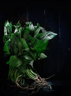 Rústica: Malfatti de Espinacas & Ricotta con Salsa de Peras al Coñac