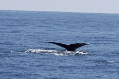 Whale tail....Awesome Beauty