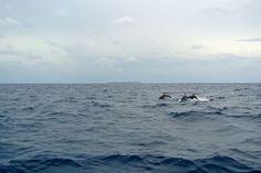 Travel Fashion Blog Lifestyle Summer Maldives Dolphins Wildlife Natural habitat