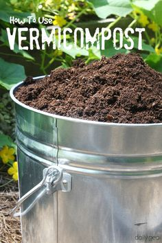 Vermicompost is one of the most nutritious and sustainable fertilizers you can use in your garden. Here are some tips on how to harvest it and use it to feed your plants.