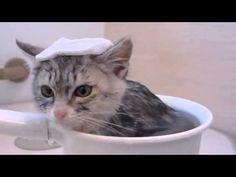 手おけ風呂でいい湯っだな♪   おもしろ動画 猫・犬・赤ちゃん