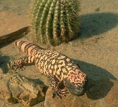 Flora+Y+Fauna+De+Mexico | Flora y fauna del desierto de mexico
