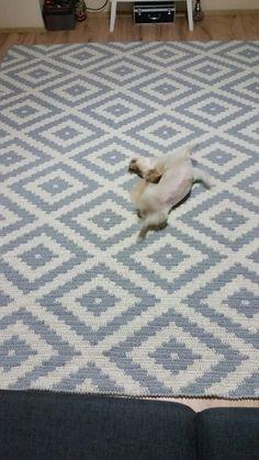 20 Best Ideas for crochet rug patterns pillows Crochet Doily Rug, Crochet Rug Patterns, Crochet Carpet, Crochet Pillow, Tapestry Crochet, Crochet Home, Rag Rug Tutorial, Rug Yarn, Rugs On Carpet
