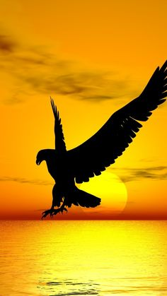 Android Eagle Wallpaper Hd For Mobile Eagle Images, Eagle Pictures, Nature Pictures, Eagle Wallpaper, Animal Wallpaper, Nature Wallpaper, Beautiful Landscape Wallpaper, Beautiful Landscapes, Beautiful Birds
