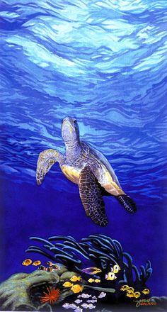 Honu, Hawaiian Green Sea Turtle - Tabora