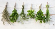 If being a green thumb doesn't come naturally, this is the only herb-growing guide you will need. Cress, Outdoor Areas, Live Long, Vegetable Garden, Gardening Tips, Greenery, Flowers, Food Tips, Backyards