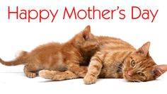 cat-happy-mothers-day-gif — Postimage.org