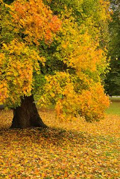 Autumn Foliage by 2benny on Flickr.