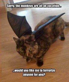 Monkey cat is here to help. - Funny Monkeys - Funny Monkeys meme - - Monkey cat is here to help. The post Monkey cat is here to help. appeared first on Gag Dad. Funny Animal Memes, Cute Funny Animals, Funny Animal Pictures, Cute Cats, Funny Cats, Funny Monkeys, Cats Humor, Funny Humor, Funny Horses