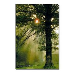 Trademark Art 'Magical Tree' by Kathie McCurdy Photographic Print on Canvas Size: 32'' H x 22'' W x 2'' D