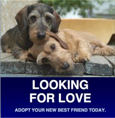 Dachshund Rescue Home Page