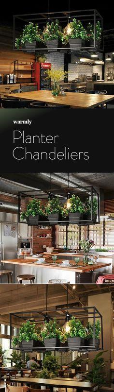 Iron Planter Chandelier Planter Chandeliers & Off at Warmly The post Iron Planter Chandelier & Creative ideas appeared first on Farmhouse decor . Chandelier Creative, Modern Chandelier, Large Chandeliers, Küchen Design, House Design, Design Ideas, Modern Design, Funny Design, Interior Design