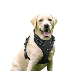 Rabbitgoo Dog Harness No-Pull Pet Harness Adjustable Outdoor Pet Vest Reflective Oxford Material Vest for Dogs Easy Control for Small Medium Large Dogs (Black, L) : Pet Supplies Border Collie, Large Dogs, Small Dogs, Dog Hiking Gear, Friday Dog, Tactical Dog Harness, Dog Muzzle, Basic Dog Training, Training Tips