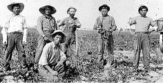 todayinlaborhistory:    Today in labor history, February 11, 1903: Japanese and Mexican laborers unite to form the Japanese-Mexican Labor Association to fight the labor contractor responsible for hiring at the American Beet Sugar Company in Oxnard, California. They refused to work until their grievances were addressed and by the first week in March, over 90% of the county's beet industry labor force had joined the JMLA, bringing the sugar industry to a standstill. The laborers ultimately…