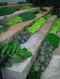Plants in between steps! Love this idea, perfect for short plants, cactus, succulents, herbs maybe or plants you don't want spreading out.