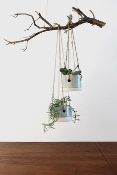 hanging potted plants