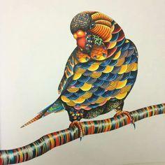 Inspirational Coloring Pages by Catarina Gomes #inspiração #coloringbooks #adultcoloring #milliemarotta #reinoanimal #animalkingdom #livrosdecolorir #toucan