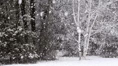 下雪的日子