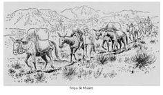 """Tropeiro, condutor de tropa, arrieiro ou bruaqueiroé a designação dada aos condutores de tropas ou comitivas de muares e cavalos entre as regiões de produção e os centros consumidores no Brasil a partir do século XVII. Mais ao sul do Brasil, também são conhecidos como carreteiros devido às carretas com as quais trabalhavam.  """"Arrieiro"""" vem de """"arre"""", interjeição usada para incitar os animais a andarem.""""Bruaqueiro"""" vem de """"bruaca"""", saco de couro usado para transportar cargas no lombo de…"""