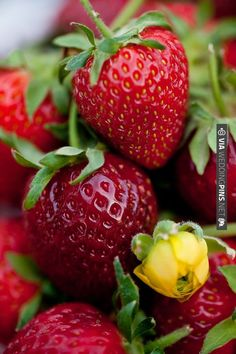 summer ripe strawberries | CHECK OUT MORE IDEAS AT WEDDINGPINS.NET | #weddingfavors