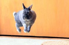 """A """"binky"""" is what this action is called! It isn't a jump, as bunnies bound from all four limbs."""