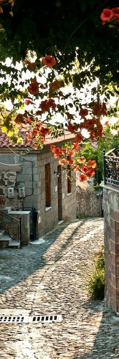 Streets in Provence - Dabisse, Les Mees | France