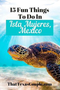 Planning a trip to Mexico? Then you should consider the island of Isla Mujeres right off of Cancun's coast. Let us show you all the things to do in Isla Mujeres. Isla Mujeres Mexico | Isla Mujeres things to do | Mexico travel tips | Isla Mujeres things to do | Isla Mujeres things to do snorkel | Isla Mujeres travel Usa Travel Guide, Travel Usa, Travel Tips, Travel Articles, Mexico Travel, Mexico Trips, North America Destinations, Underwater Sculpture, Sunrise Yoga
