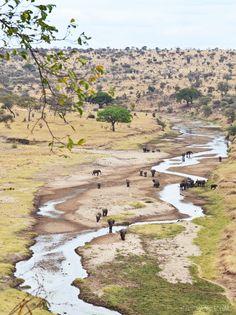 luzia pimpinella | travel tansania | a safari day at the tarangire nationalpark