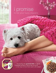 One of my friends owns this Westie. She did most of the Caeser ads and  commercials.