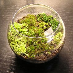 how cute for a kid project! a moss garden!