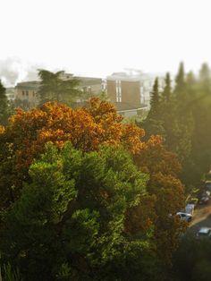 Ancona, Marche, Italy - Autumn Tree -by Gianni Del Bufalo (CC BY-NC-SA) by gianni del bufalo