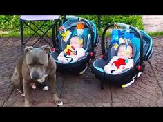 Funny Dogs Protecting Babies Compilation… #funnypetvideos #funnyanimals