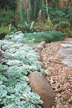 ground cover hens & chicks love the rock boarder