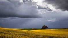 Rape Field Under a Stormy Sky near Shipton-under-Wychwood-min