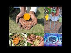 Medicinal Rice P5M Formulations for Canscora Excess: Pankaj Oudhia's Med...