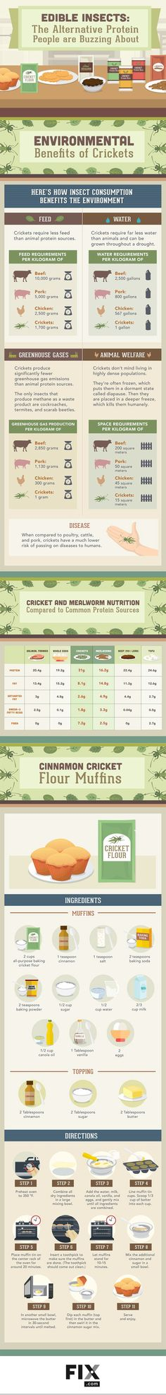 Edible Insects:The Alternative Protein People are Buzzing About – Medium