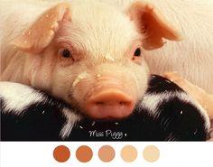Miss Piggy - Kleurenpalet roze / rood.