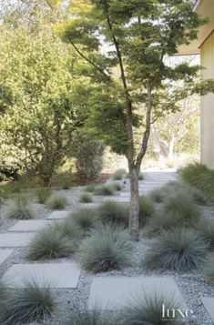Front Yard and Garden Walkway Landscaping Inspirations 37 Front Yard Walkway, Side Yard Landscaping, Modern Landscaping, Landscaping Ideas, Walkway Ideas, Landscaping Software, Residential Landscaping, Inexpensive Landscaping, Landscaping With Gravel