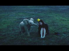 Oh how I want a miniature elephant! Photo by Dara Scully, seen on This is Colossal.