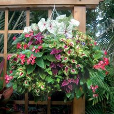 Create creative hanging flower arrangements with Pamela Crawford hanging baskets. These hanging flower baskets add beauty to any garden. Hanging Flower Arrangements, Hanging Flower Baskets, Basket Planters, Hanging Planters, Garden Planters, Container Flowers, Container Plants, Container Gardening, Unique Gardens